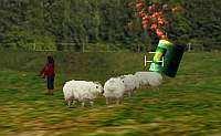 Schafjagd